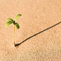 plant desert life