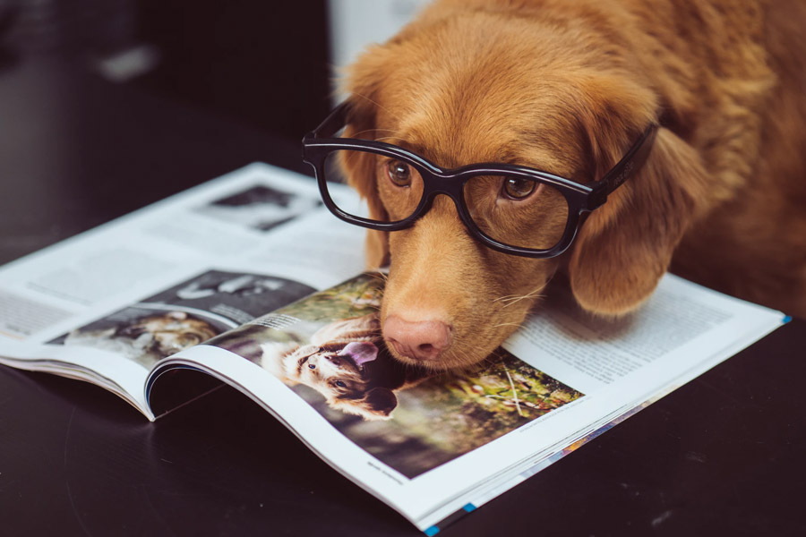 Dog with glasses reading a book on dogs
